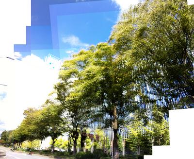 広岡の木々c1000.jpg