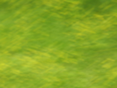 緑中の黄色500.jpg