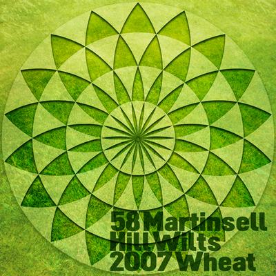 58MartinsellHillWilts2007Wheat_t600.jpg