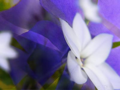 紫と白600.jpg