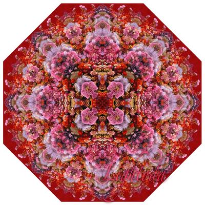 FlowerHill_t1000.jpg