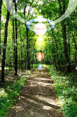 ForestSound1000.jpg