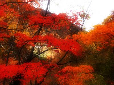 IMG_1137+blur1000.jpg