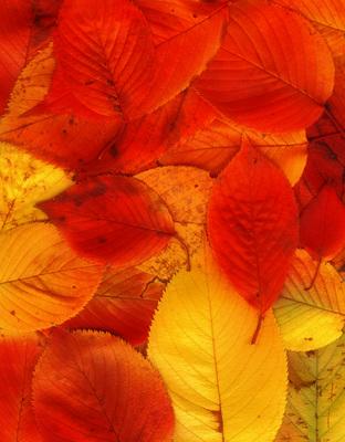 fallen leaf 01+blur1000.jpg